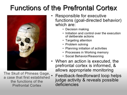prefrontal-cortex-3-728